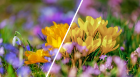 [Infographic] How Do You Change a Photo's Colors?