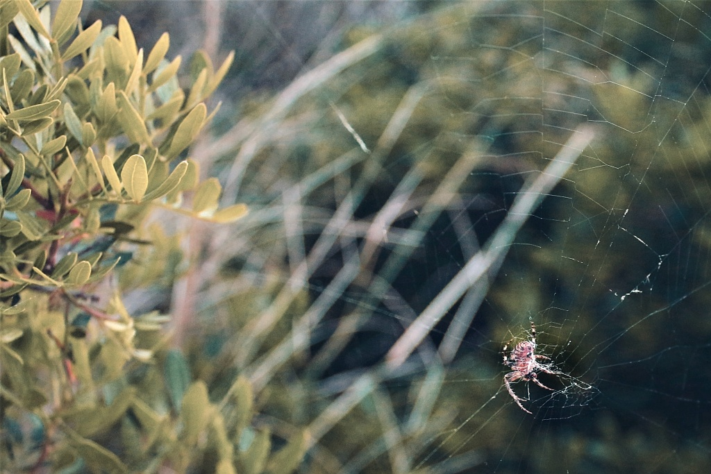 How to Take Vacation Pictures - spider