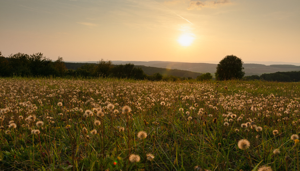 How Does a Landscape's Light Change During One Day? - landscape in evening