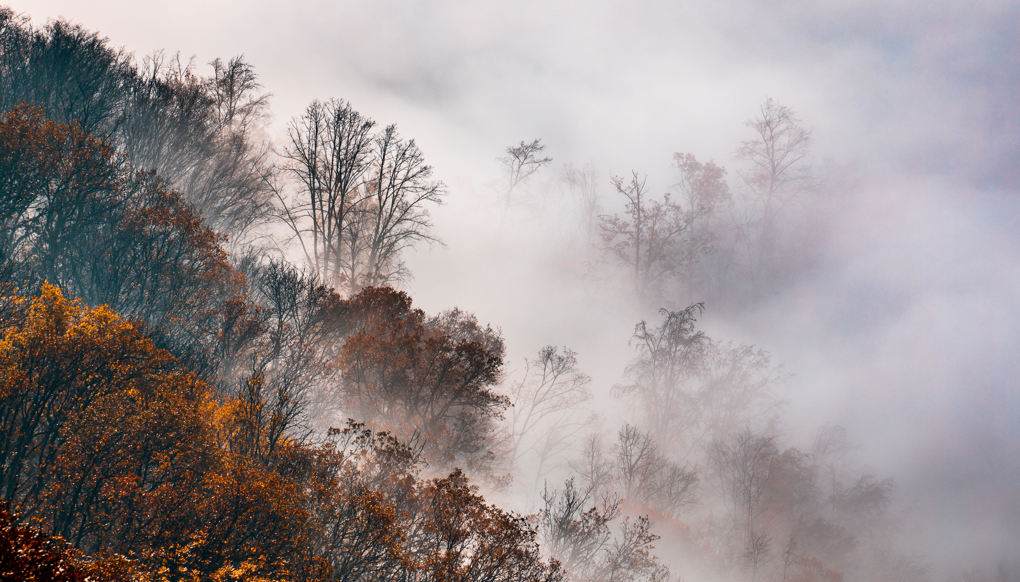 How to Photograph Foggy Landscapes: Focus on the Details