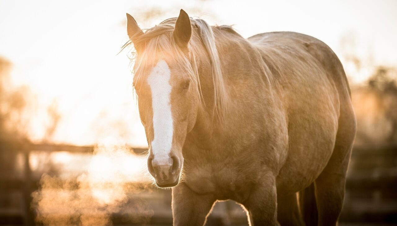 How Do You Get Great Horse Photos? Soap On, Ears Forward, and Watch That Composition!