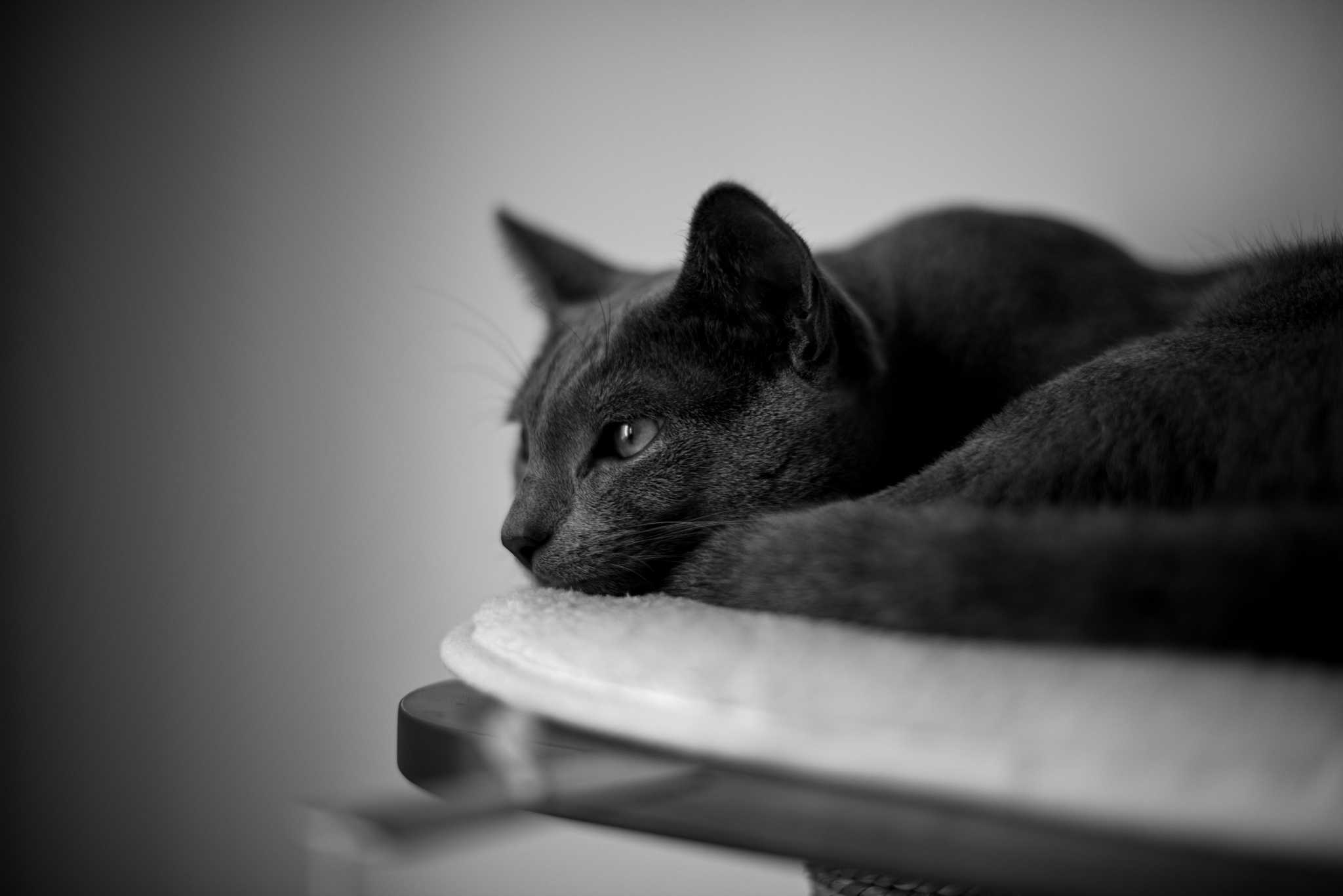Tips for Editing Cat Photos