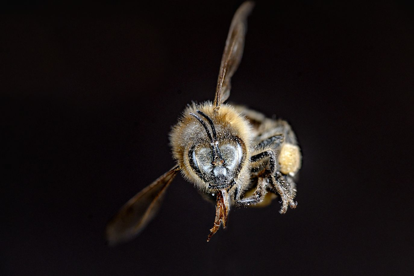 Hacks That Will Improve Your Macro Photos , bee
