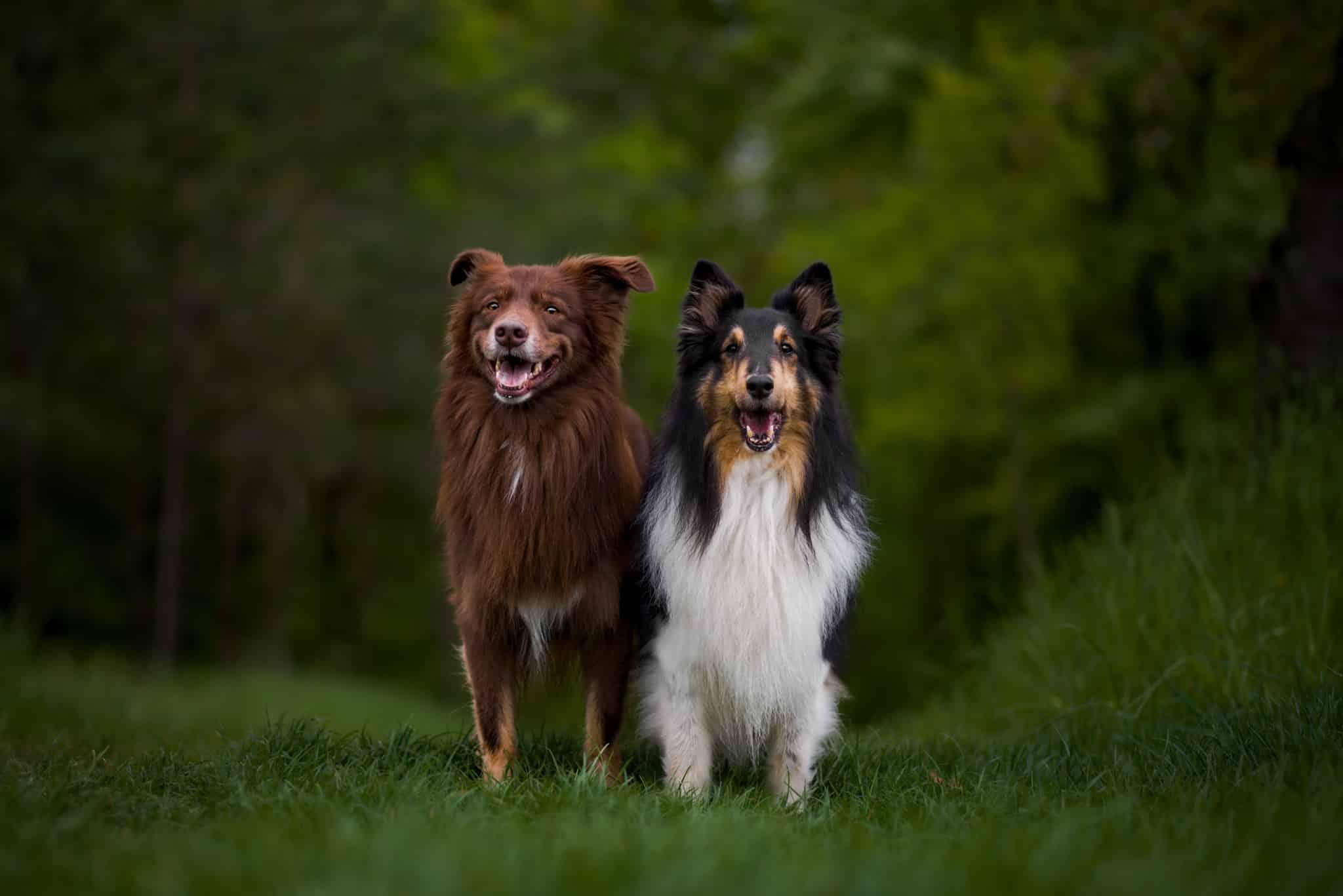 Míša Malá and Eliška Hrůzová agree that dog photography is not always easy